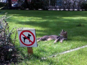 Cats Only Humor