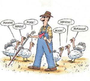 "Cartoon showing a visually impaired farmer walking through a group of turkeys who are saying ""MOOOO!"""