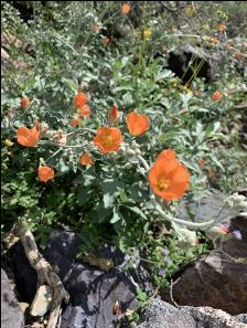 Spring Desert Blooms