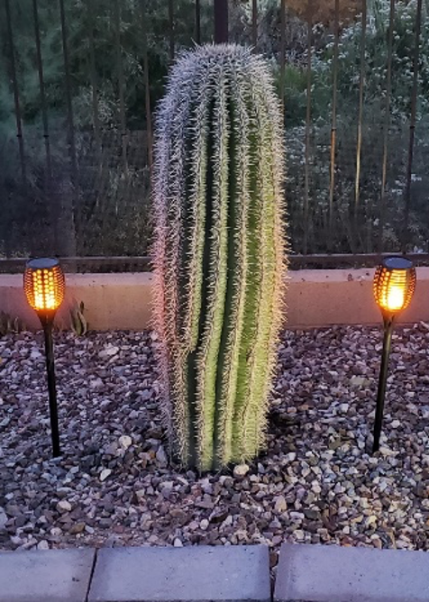 Miller Backyard Cactus at Night