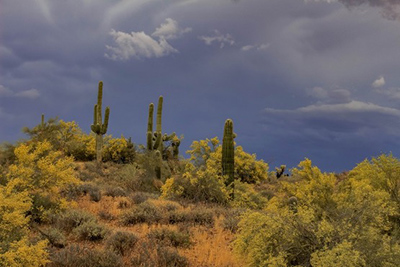 Arizona monsoon season, desert landscape